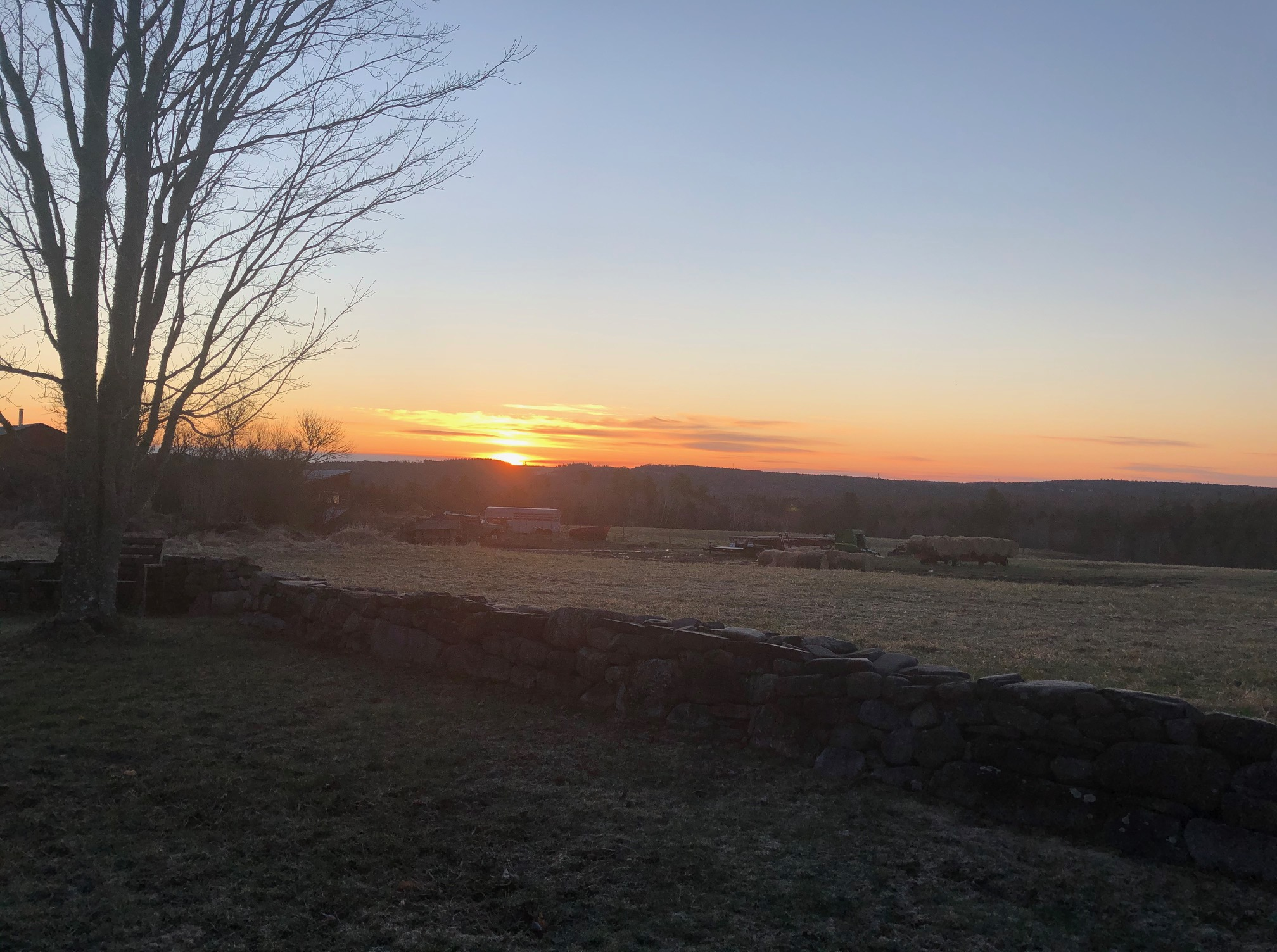 Dawn in my backyard, spring 2020